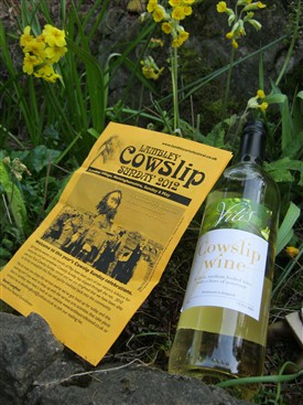 Photo: Illustrative image for the 'A unique May custom...Cowslip Sunday, Lambley' page