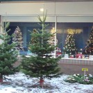 Photo:Real trees outside a shop selling fake trees on the Square in Beeston