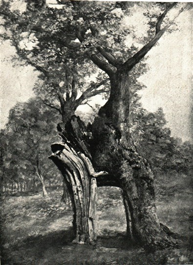 Photo:From Joseph Rodgers' 'Scenery of Sherwood Forest', 1908