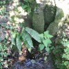 Page link: St. Catherine's Well, Southwell