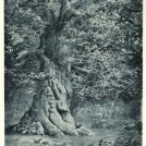 Photo:The Simon Foster Oak from Joseph Rodgers' 'The Scenery of Sherwood Forest' (Fisher & Unwin, 1908)