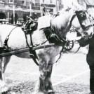 Photo:8.  Certificates were also awarded for the best groomed horse.  Here in c.1936 the horse belonging to Jack Bailey, coal merchant of Victoria Street, has won 4th prize pulling Parliament Street Methodists device.  Standing with the horse is Mr William Atkinson, carter for Claypole flour mill.