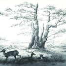 Photo:The Seven Sisters Oak, drawn by Emma Wilmot in the early 19th century